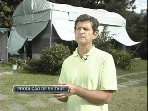 Cultivo de Shiitake em Nova Friburgo