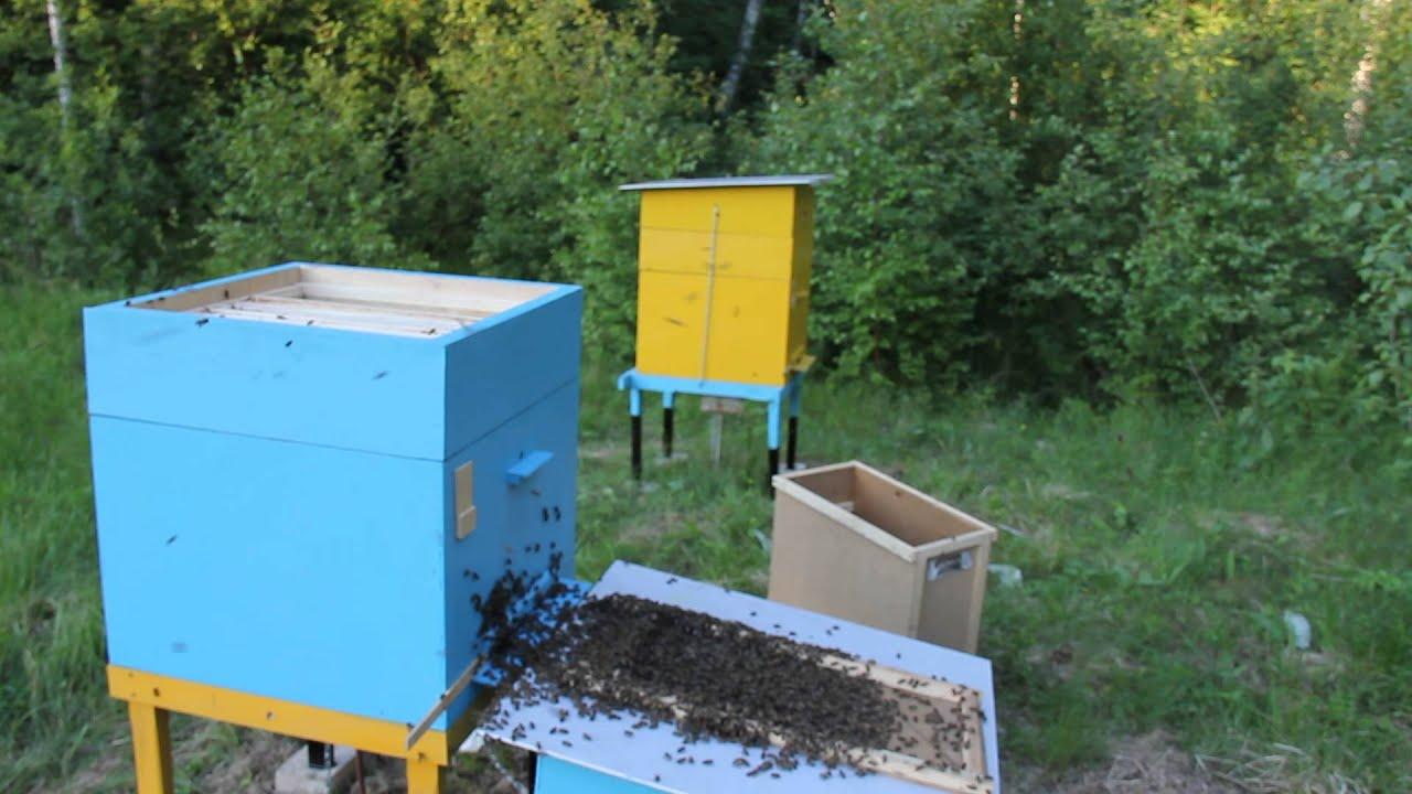 Как приманить пчел: цветы медоносы в саду 72