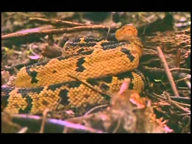 serpientes documental