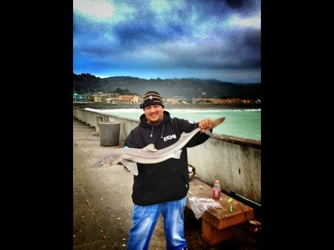 Dogfish shark fish videos for Pacifica pier fishing report