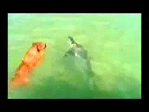 คลิปหมากัดฉลาม