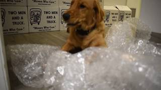 National Bubble Wrap Day at TWO MEN AND A TRUCK