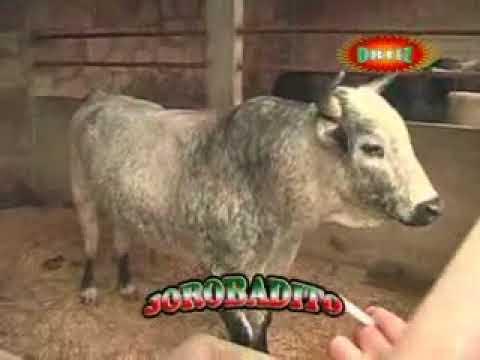 Entevista a memo ocampo desde El rancho!!