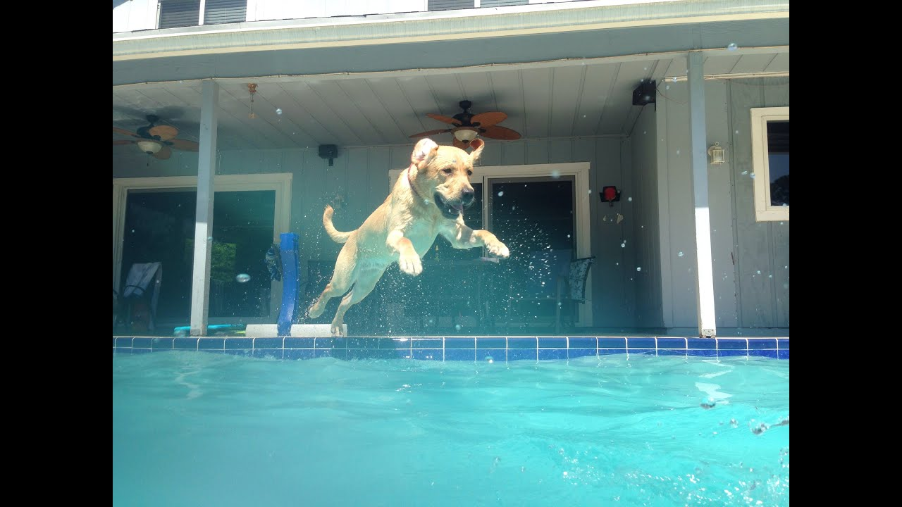 Dog jumping into a pool 2 youtube for Pool guy show