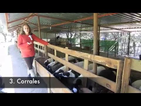 Proyecto Borregos