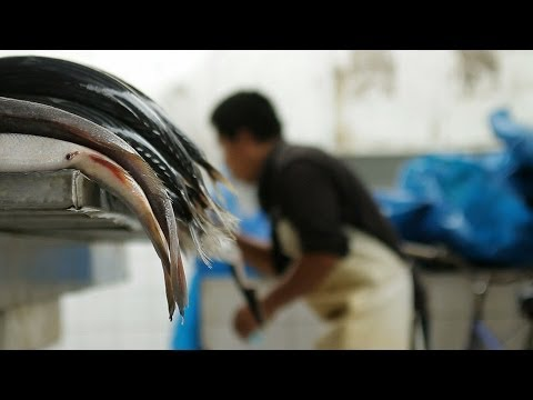 Exposed: Killing Dolphins - Dying for Lobsters