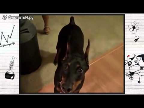 Собака собирается на дачу (рубрика Животный Юмор)