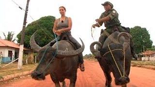 Animales por el mundo: la policía de Marajó (Brasil) patrulla en búfalo