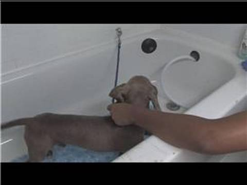 0 Dog Grooming : How to Give a Dog a Bath