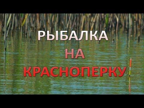 рыбалка на красноперку видео на поплавочную удочку