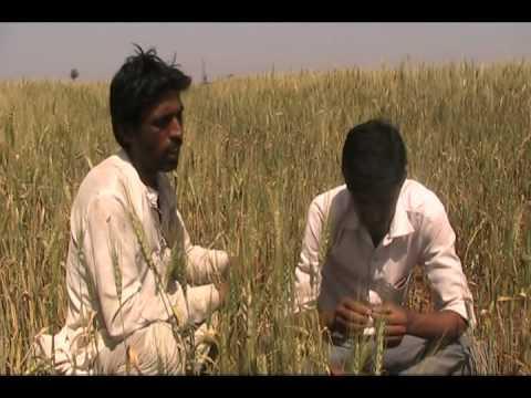 Identification of Black Rust_Hindi_ADS_Rajgarh