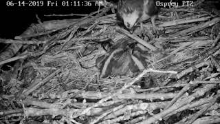 Crooked Lake Ospreys~ Last Chance to Cover on a Cool Night 6/14/19