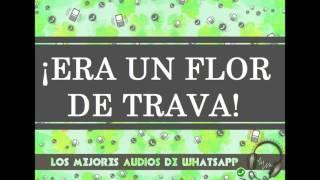 ¡ERA UN FLOR DE TRAVA! - Los Mejores Audios De WhatsApp