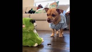 Cute funny animals - video 02