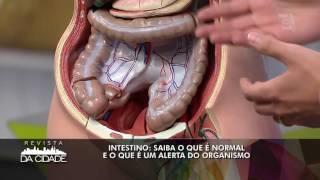 cipolla intestino
