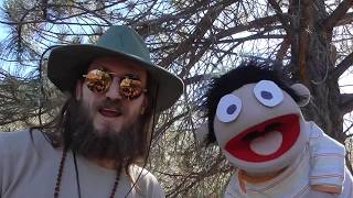 Western Grey Squirrel - Children's Education with Roscoe the puppet