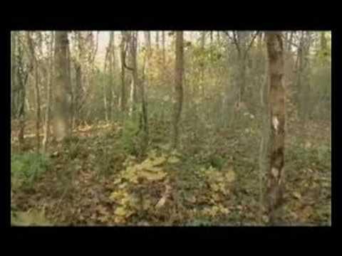 Zum Video von Wolpi