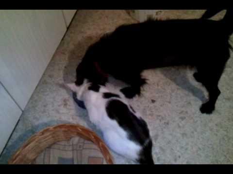 hund und katze spiele