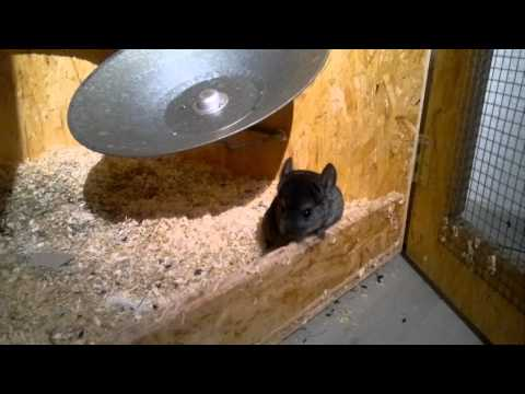 how to make a chinchilla wheel
