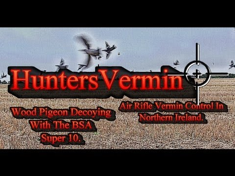 Pigeon Hunting With Air Rifle http://www.how-to-diy.org/kNJHIFiXms6Usu/Hunting-Geese,-Doves-&-Squirrels-with-an-Air-Rifle-and-22LR-in-South-Africa.html