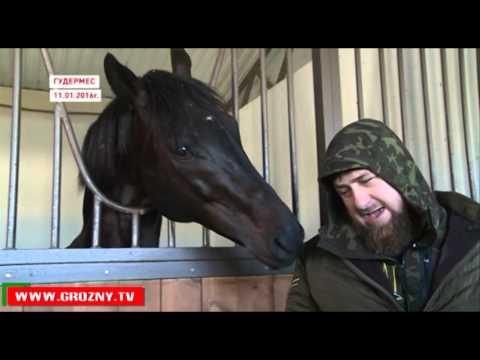 Спасенная Кадыровым лошадь резвится в вольере
