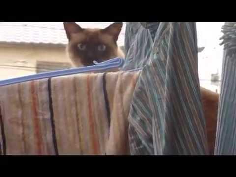 Приколы с кошками РЖАКА Неудачный паркур кота!