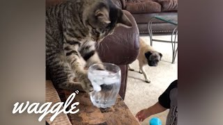 Cats are Jerks | Funny Cat Videos