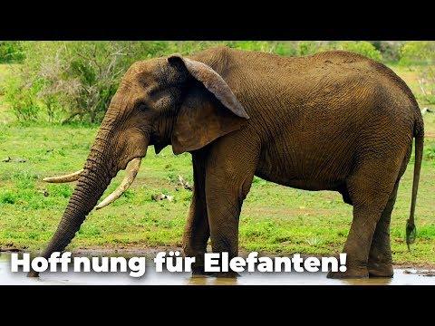 Immer mehr Tiere werden geschützt! & Hoffnung für Elefanten! Artenschutzkonferenz - Clixoom nature