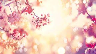 Download Lagu Relaxing Sleep Music: Soft Piano Music, Sleeping Music, Soothing Meditation Music, Yoga Music ★98 Gratis STAFABAND