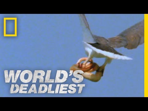 World s Deadliest - Eagle vs. Toxic Snake