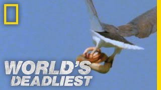 Eagle vs. Toxic Snake   World's Deadliest