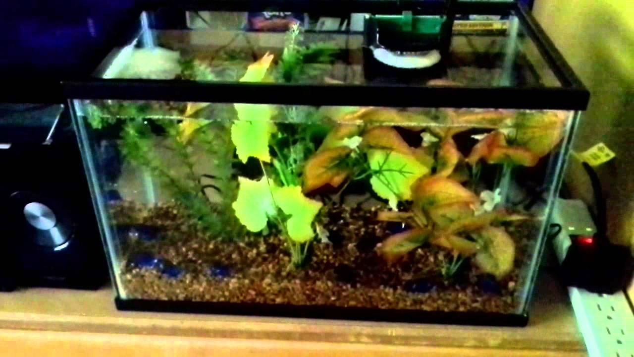 5 Gallon Betta Fish Tank Youtube
