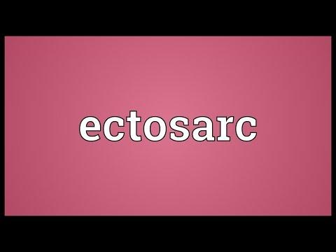 Header of ectosarc
