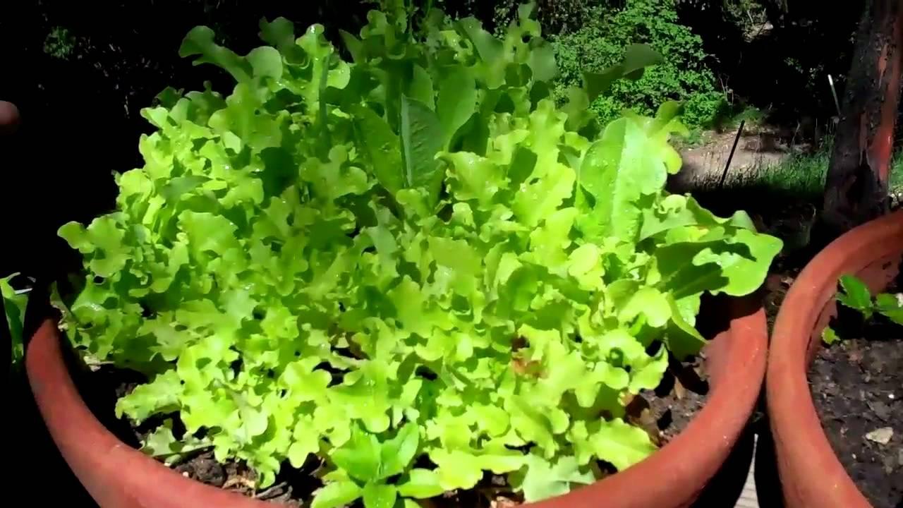 How To Vegetable Garden In Pots Youtube