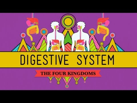 The Digestive System: CrashCourse Biology #28