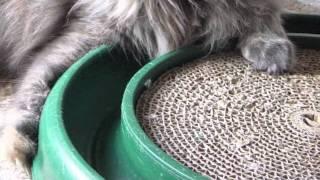 Vídeo 8 de Scratching Post