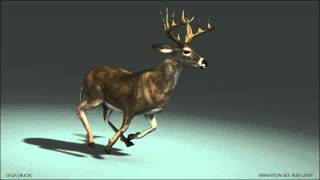3D Deer Buck Run Loop test HD