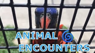 ANIMAL ENCOUNTERS - FEEDING ANIMALS