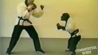 Amazing Monkey Spars Kung Fu With Black Belt Instructor