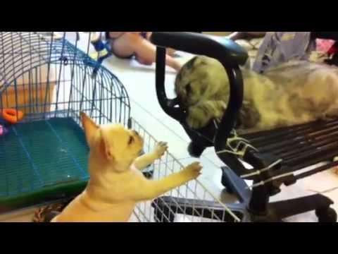 犬と猫がパンチで殴り合いまくるw