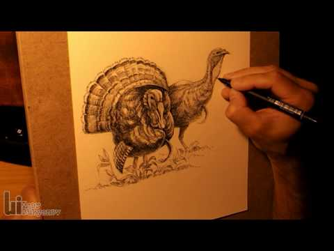 Drawing Male and Female Turkeys Video