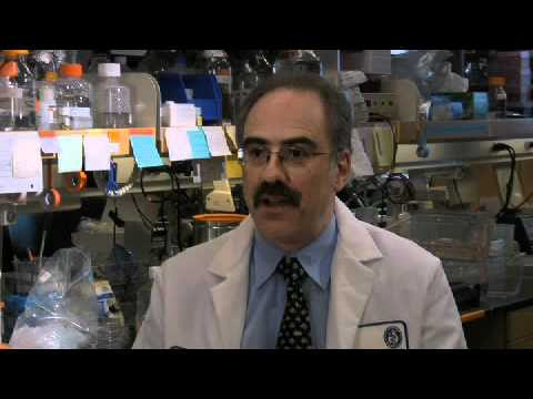 Stem Cell Therapy for Blood Diseases