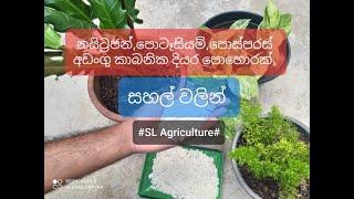 සහල් වලින් කාබනික දියර පොහොරක්,  Best natural Liquid Fertilizer for plants  from Rice