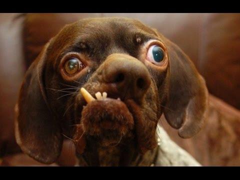 Конкурс самых страшных собак в мире