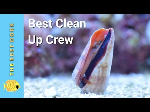 4 Clean Up Crew EVERY Marine Tank Should Have!