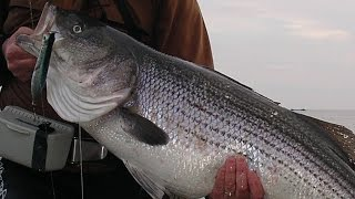 Surfcasting for Stripers - 31-pounder on a Tsunami Plug