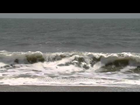 Arabian sea waves meet the shore in Cochin