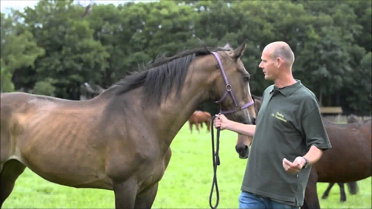 maagzweer bij paard