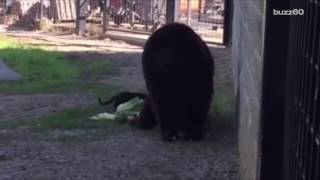 Stray Cat and Black Bear Make Unlikely Friends at a Sanctuary