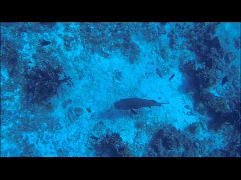 Chasse sous marine Madagascar